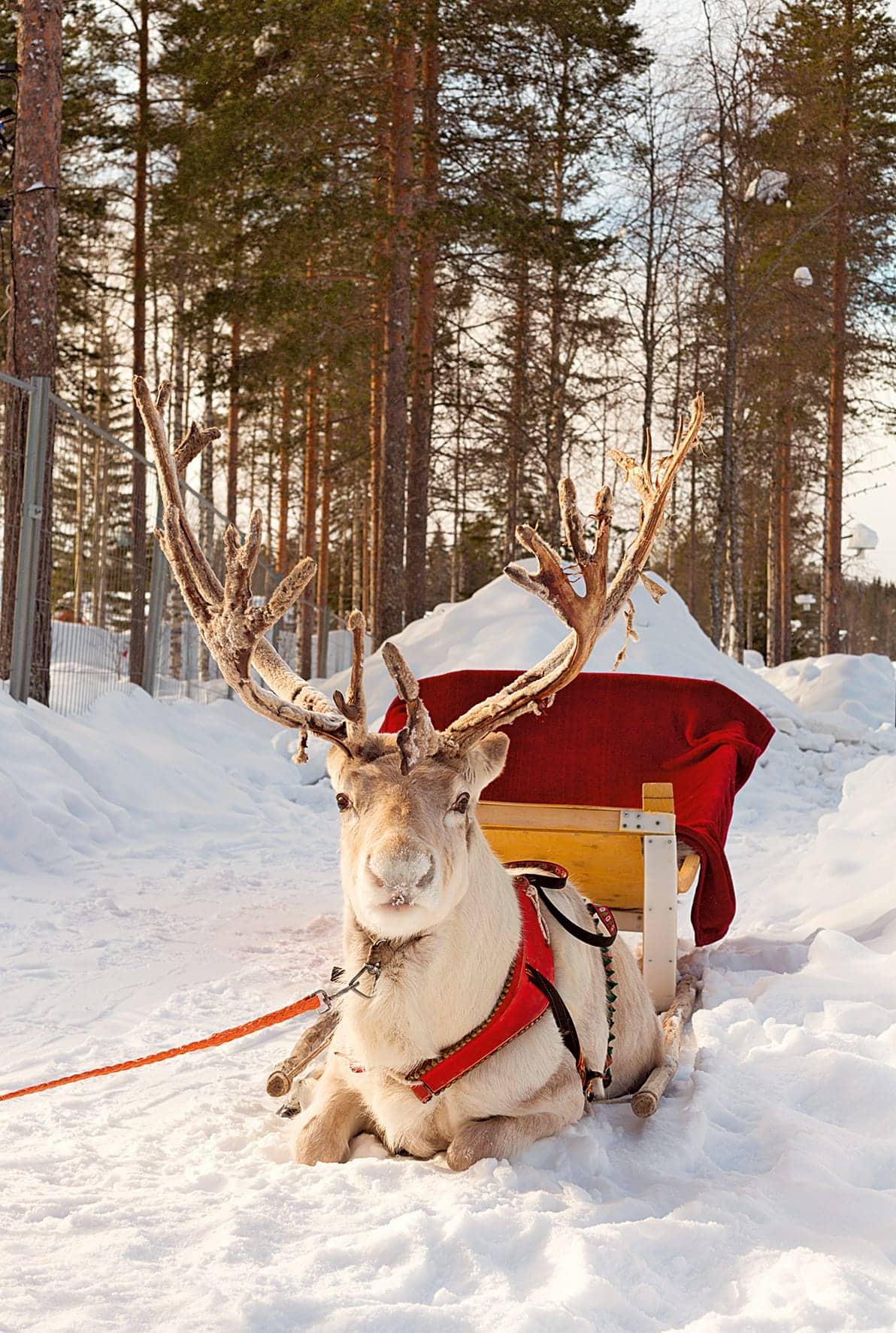 """Na sjeveru s haskijima i """"pravim"""" Djedom Božićnjakom"""